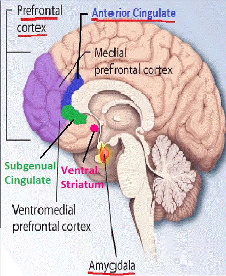 Memoria si creierul