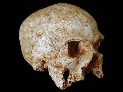 File:Hofmeyr Skull.jpg