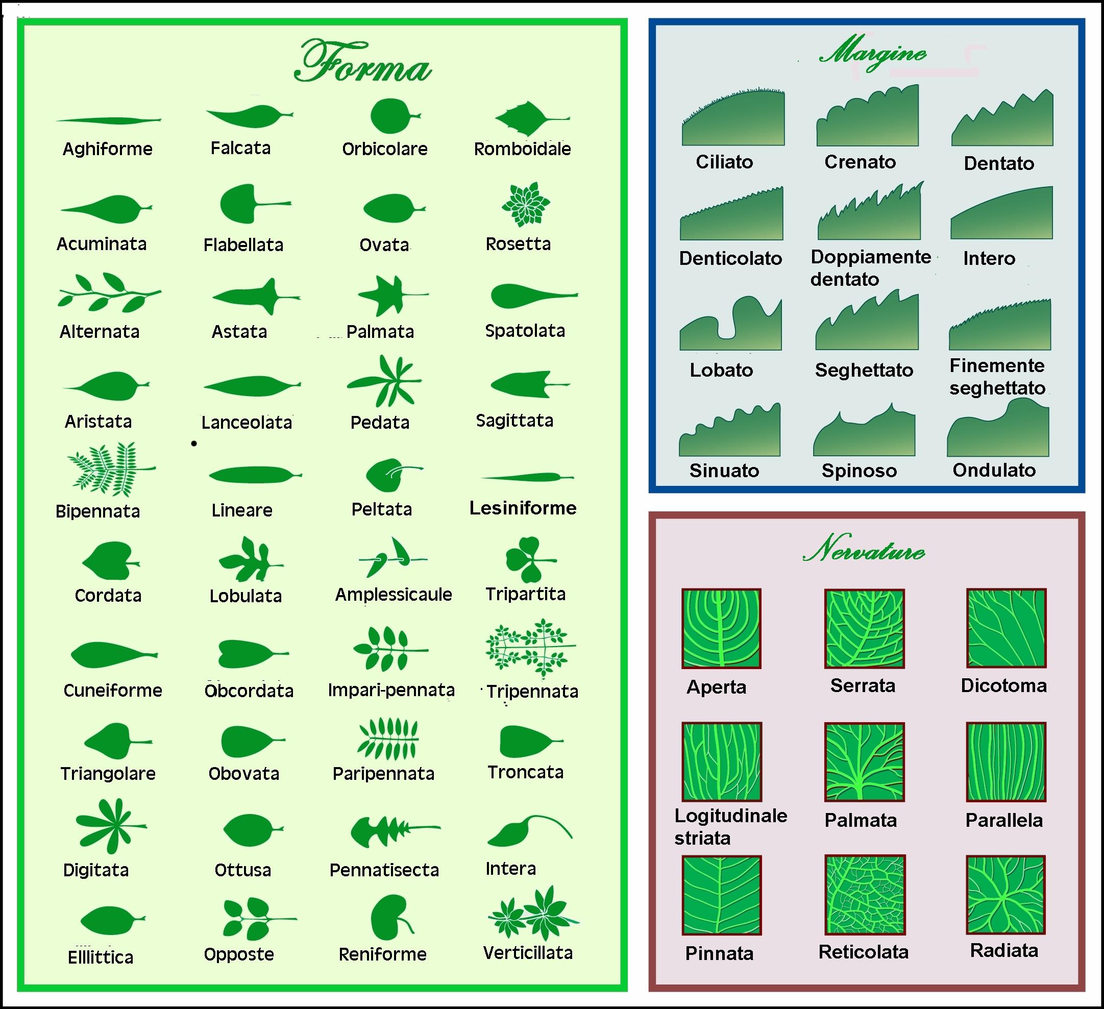Fotosintesi Clorofilliana Spiegata Ai Bambini