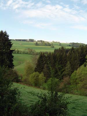 Wooded landscape of Ardennes.