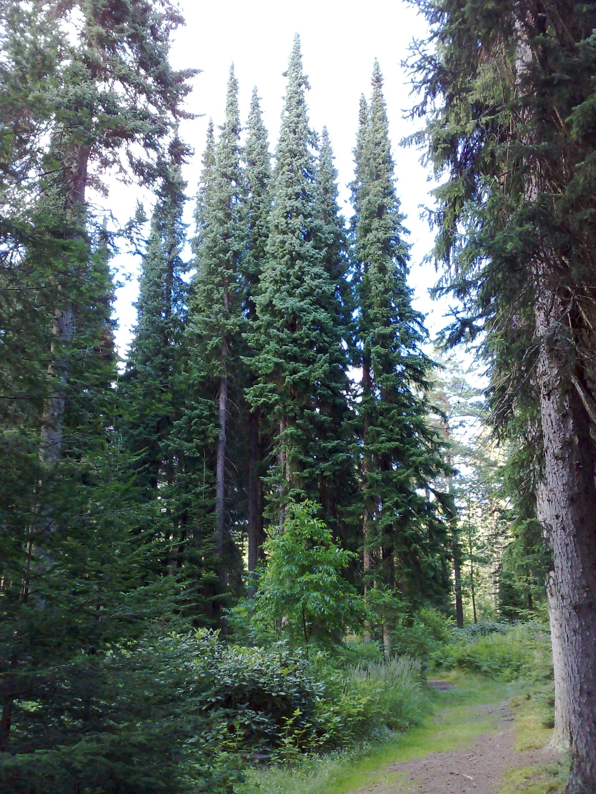 https://i1.wp.com/upload.wikimedia.org/wikipedia/commons/0/0d/Mustila_Arboretum.jpg