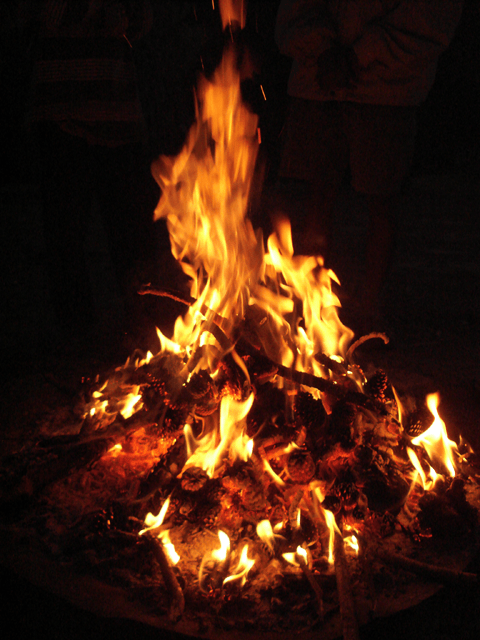 English: A fire lit using twigs and pine cones.