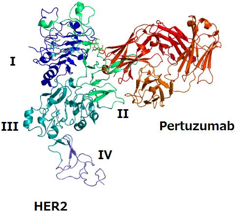 Pertuzumab Wikipedia