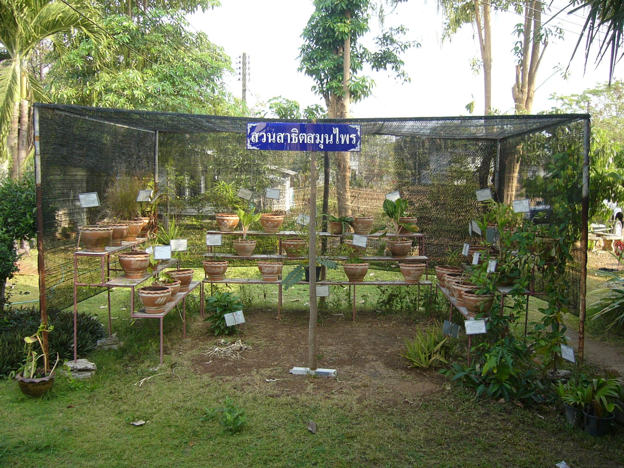 file medicinal herbs garden hospital jpg