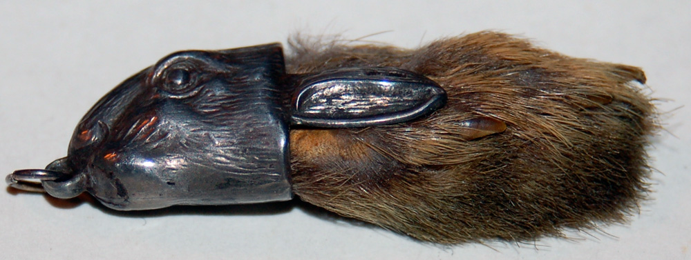 https://i1.wp.com/upload.wikimedia.org/wikipedia/commons/1/12/Rabbitsfoot.jpg