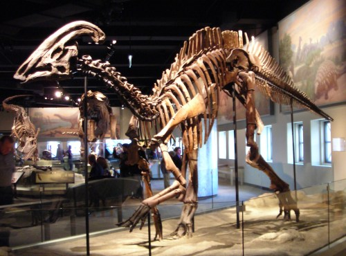 https://i1.wp.com/upload.wikimedia.org/wikipedia/commons/1/14/Parasaurolophus_cyrtocristatus.jpg?resize=500%2C370&ssl=1