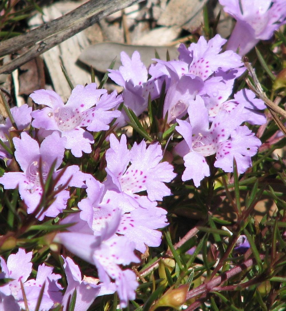 Name Some Plants