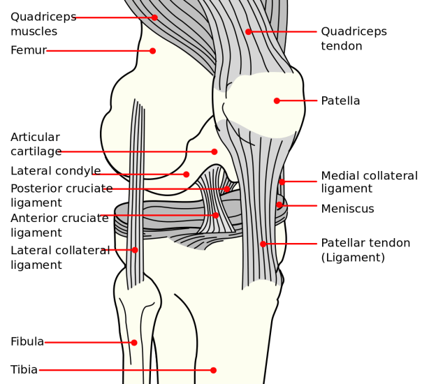 Common Knee Tests In Orthopedic Examination