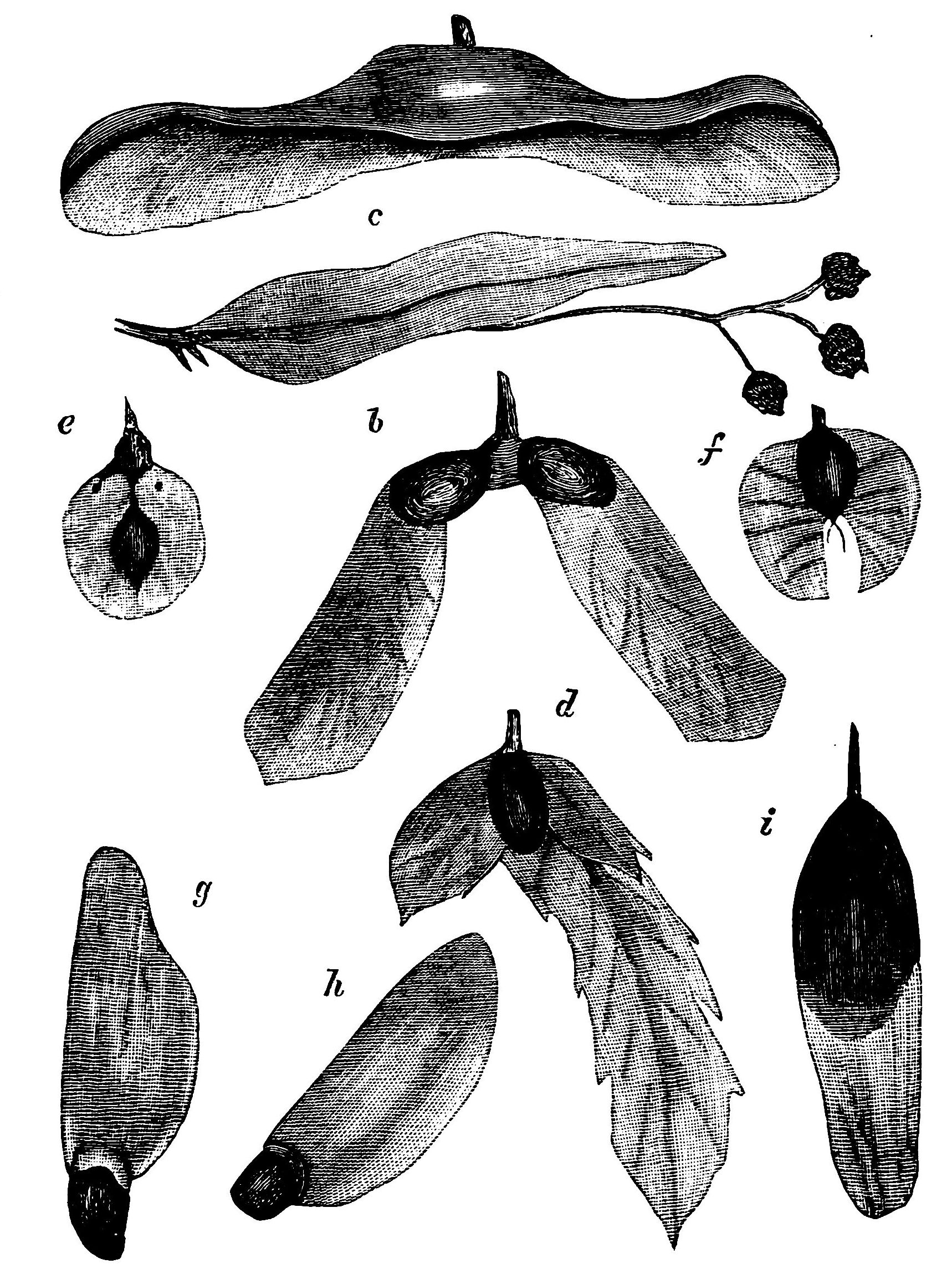File Psm V19 D181 Various Seeds Of Trees