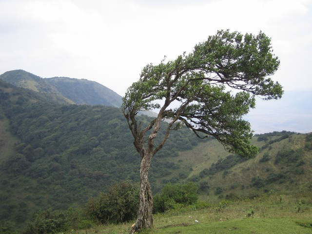 English: Ngong Hills, Kenya