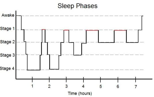 Sleep: Stages - Purpose Driven Mastery