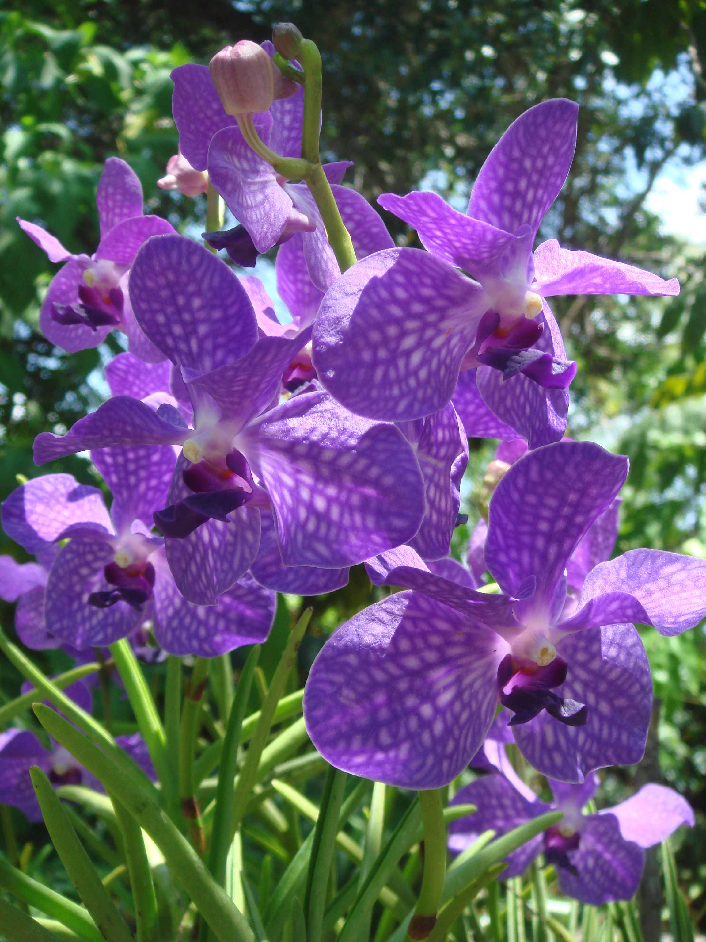 These purple orchids cannot exist because mutualism does not exist