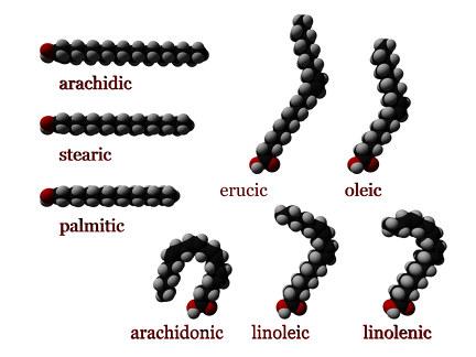 tridimensional representation of fatty acids