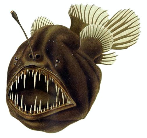 Humpback anglerfish.png