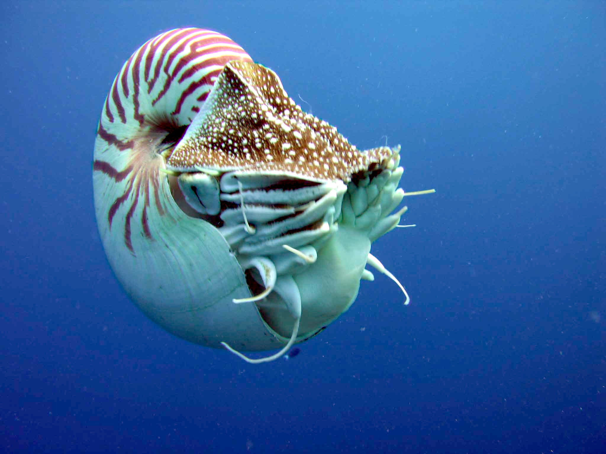 Image result for nautilus wiki