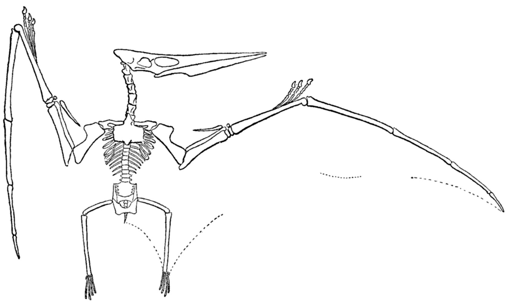 File Williston Pteranodon