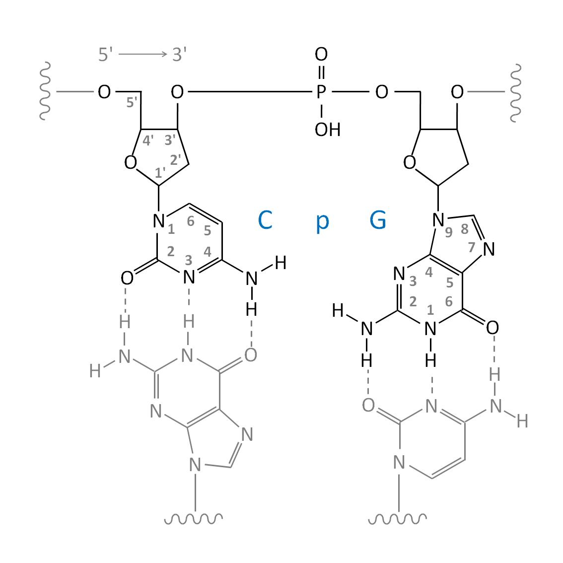 File Dna Internal Cpg Dinucleotide