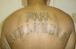 Image depicting member of MS13 gang. Work of t...