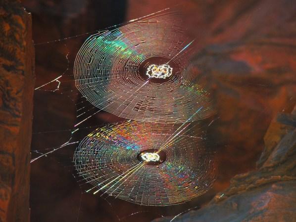 Spiral Orb Webs