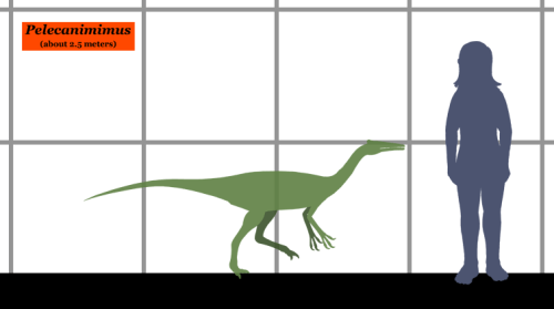File:Pelecanimimus SIZE.png