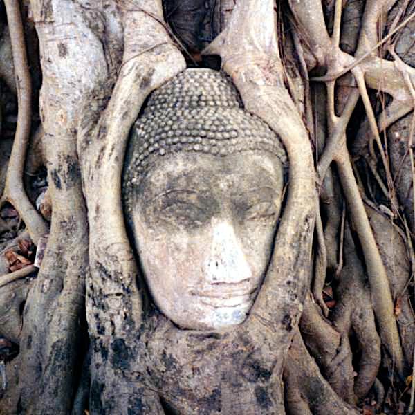 ไฟล์:Ayutthaya buddha.jpg