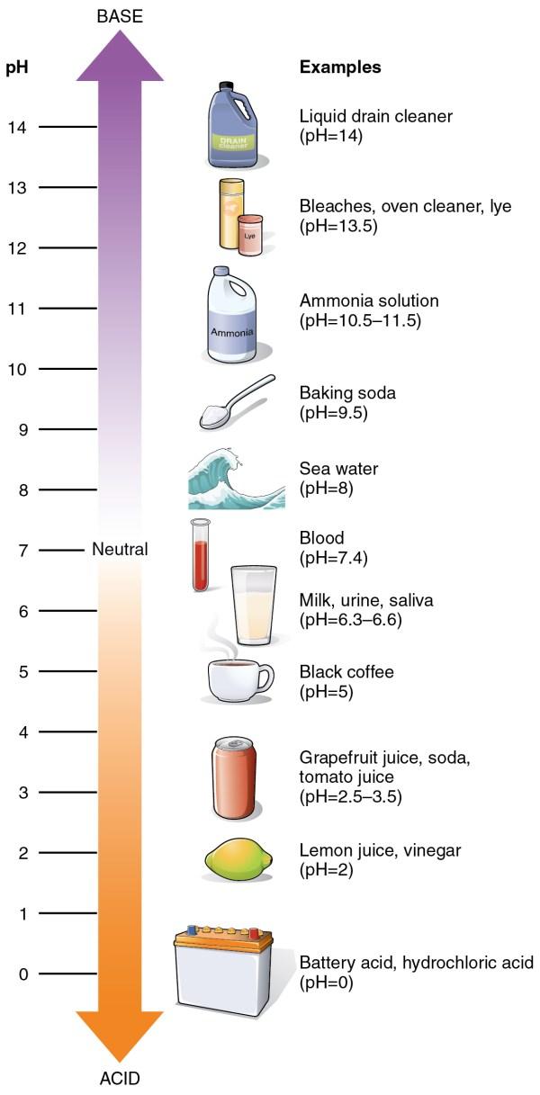 pH - Wikipedia