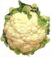 English: Cauliflower Ελληνικά: Κουνουπίδι