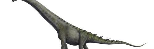 Soubor:Futalognkosaurus BW.jpg