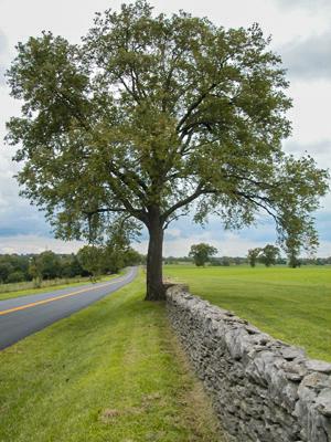 Bluegrass Region Wikipedia