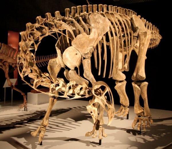 Nigersaurus Wikipedia