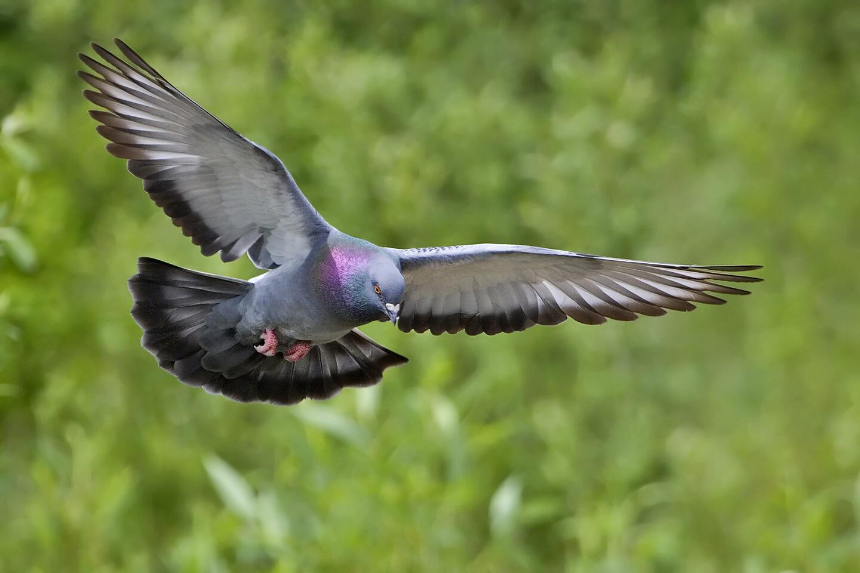 (c) Alan D. Wilson, www.naturespicsonline.com