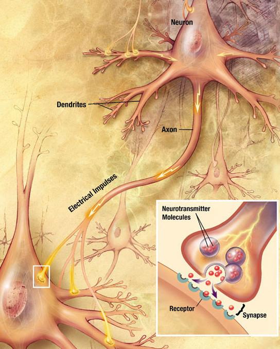 Esquema de siapsi neuronal