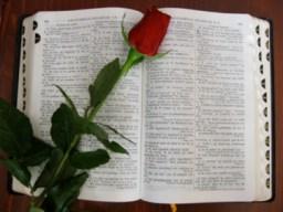 Bibbia con rosa