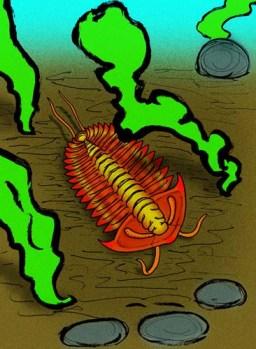 Vida marina paleozoica: Chengjiangaspis chengjiangensis