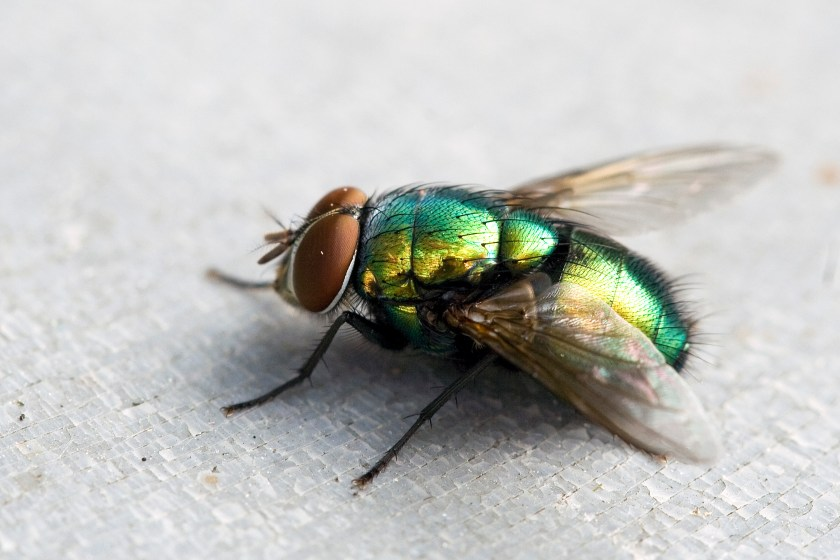 Fly Pictures