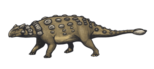 https://i1.wp.com/upload.wikimedia.org/wikipedia/commons/3/36/Ankylosaurus_magniventris_reconstruction.png?resize=500%2C226&ssl=1