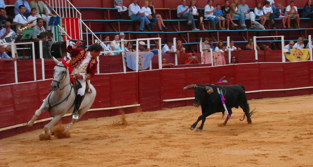 A Portuguese Matador stabs his bully bull bull