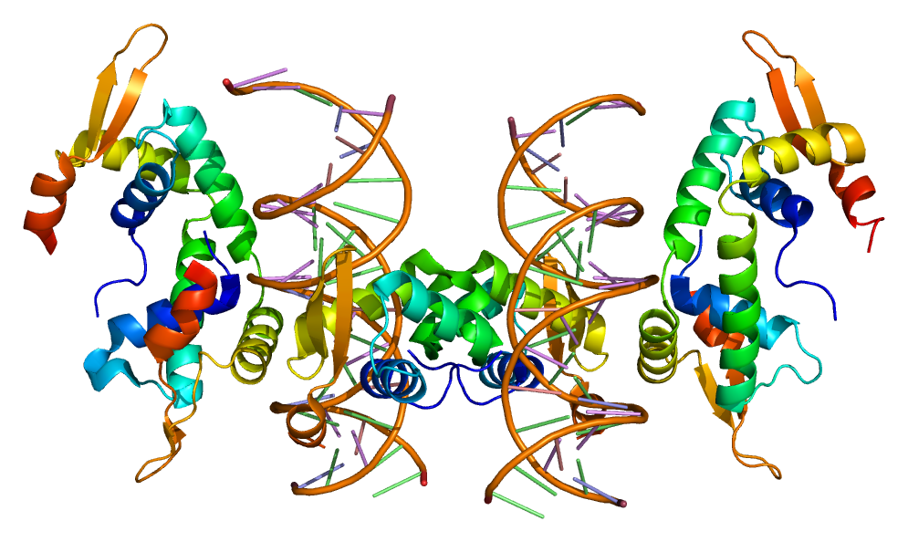 https://i1.wp.com/upload.wikimedia.org/wikipedia/commons/3/37/Protein_FOXP2_PDB_2a07.png
