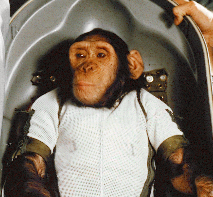 Chimpanzee seated in shaped shell wearing a white shirt