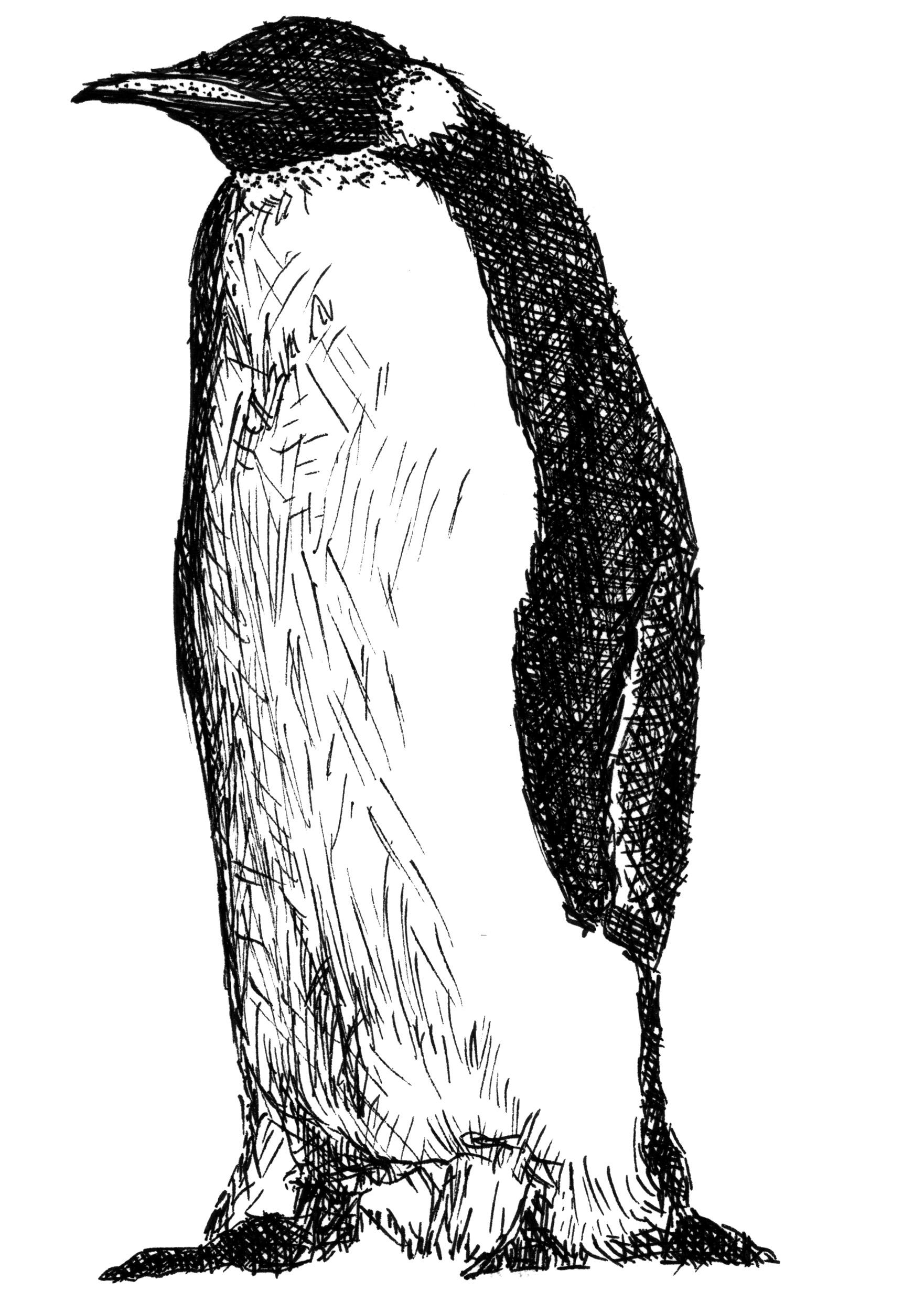 Datei Emperor Penguin Adelieland Wikipedia