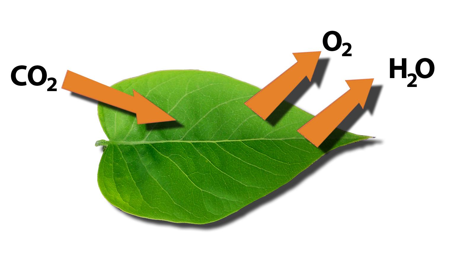 File Leaf Function