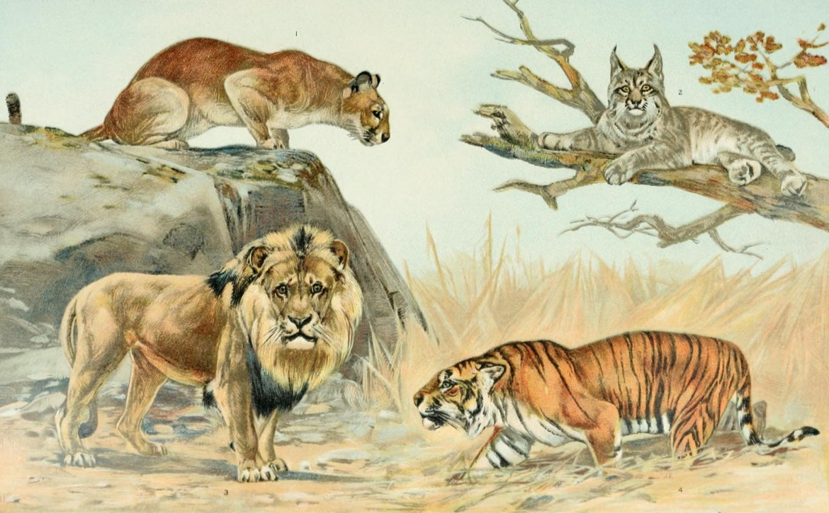 how a cat is related to a tiger a look at the cat family tree