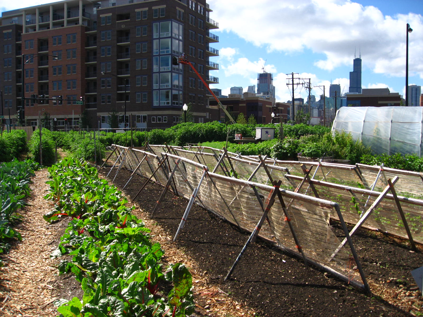 https://i1.wp.com/upload.wikimedia.org/wikipedia/commons/3/3d/New_crops-Chicago_urban_farm.jpg