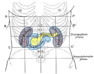 Subcostal plane  Wikipedia