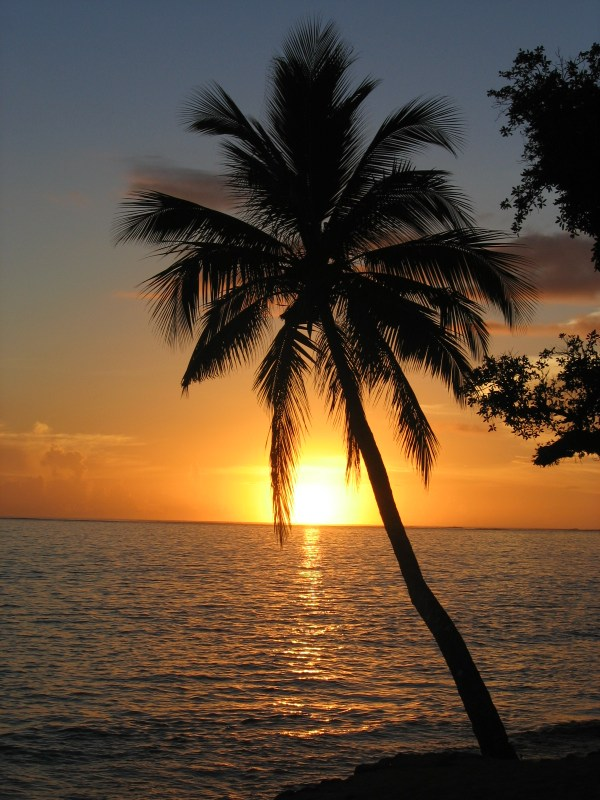 File:Sunset with coconut palm tree, Fiji.jpg - Wikimedia ...
