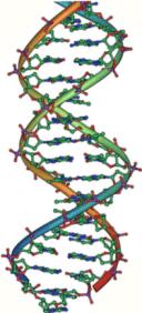 DNA double helix vertikal
