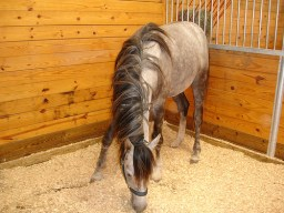 Choose non-toxic barn and fence paint for horse stalls