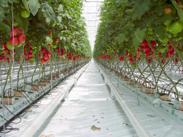 Image result for indoor farming