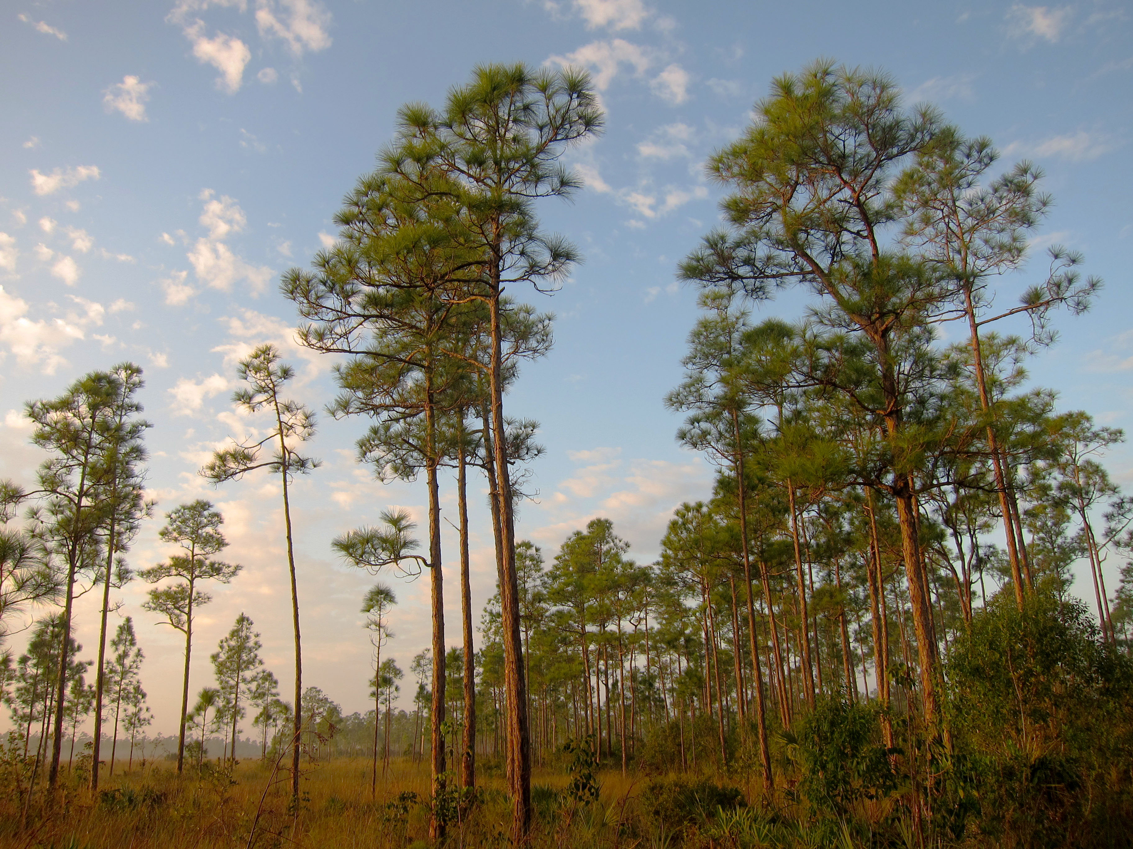 Um Sells Endangered Forest To Walmart Developer