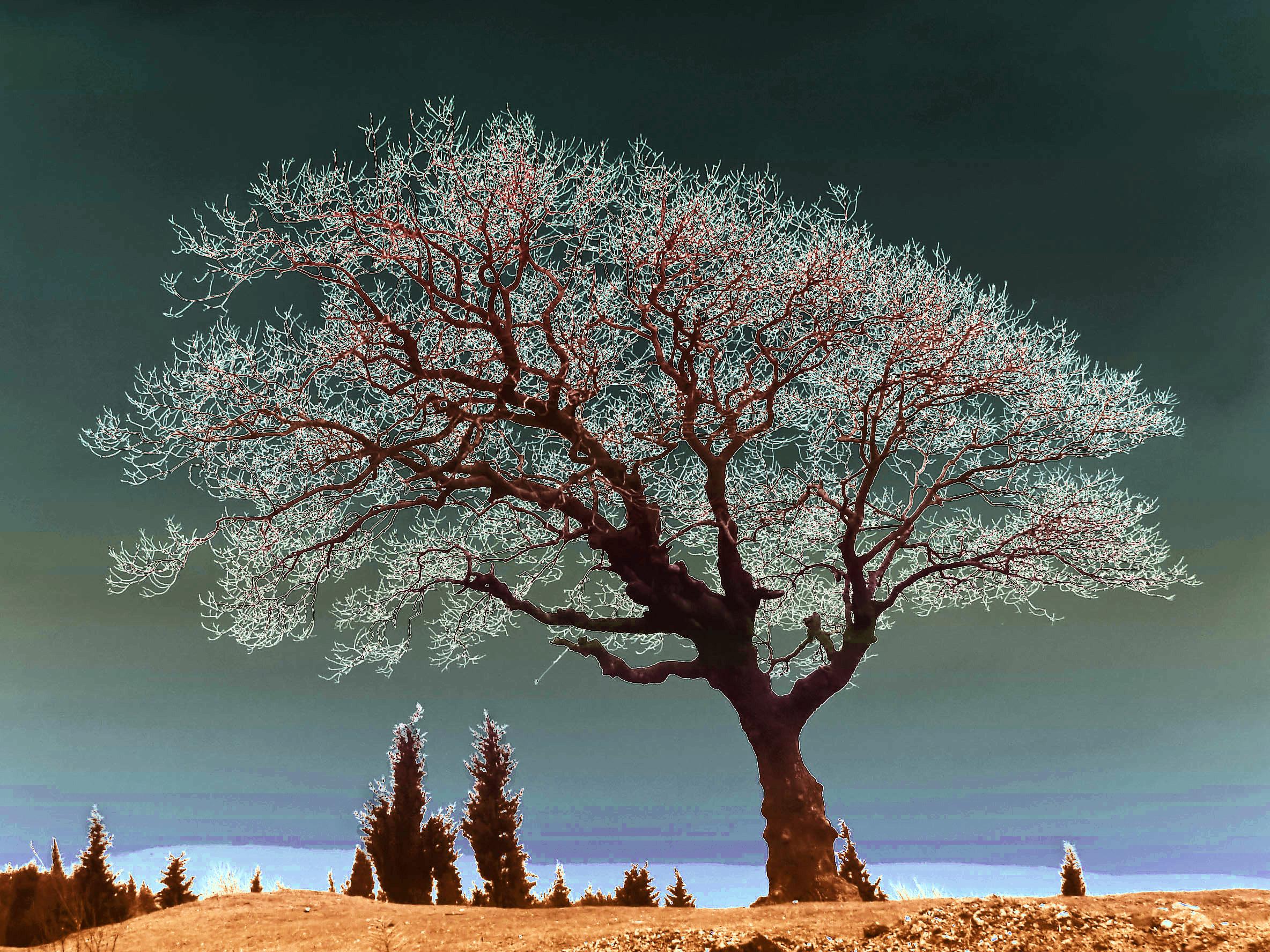 Spiritual Tree, Solarisation